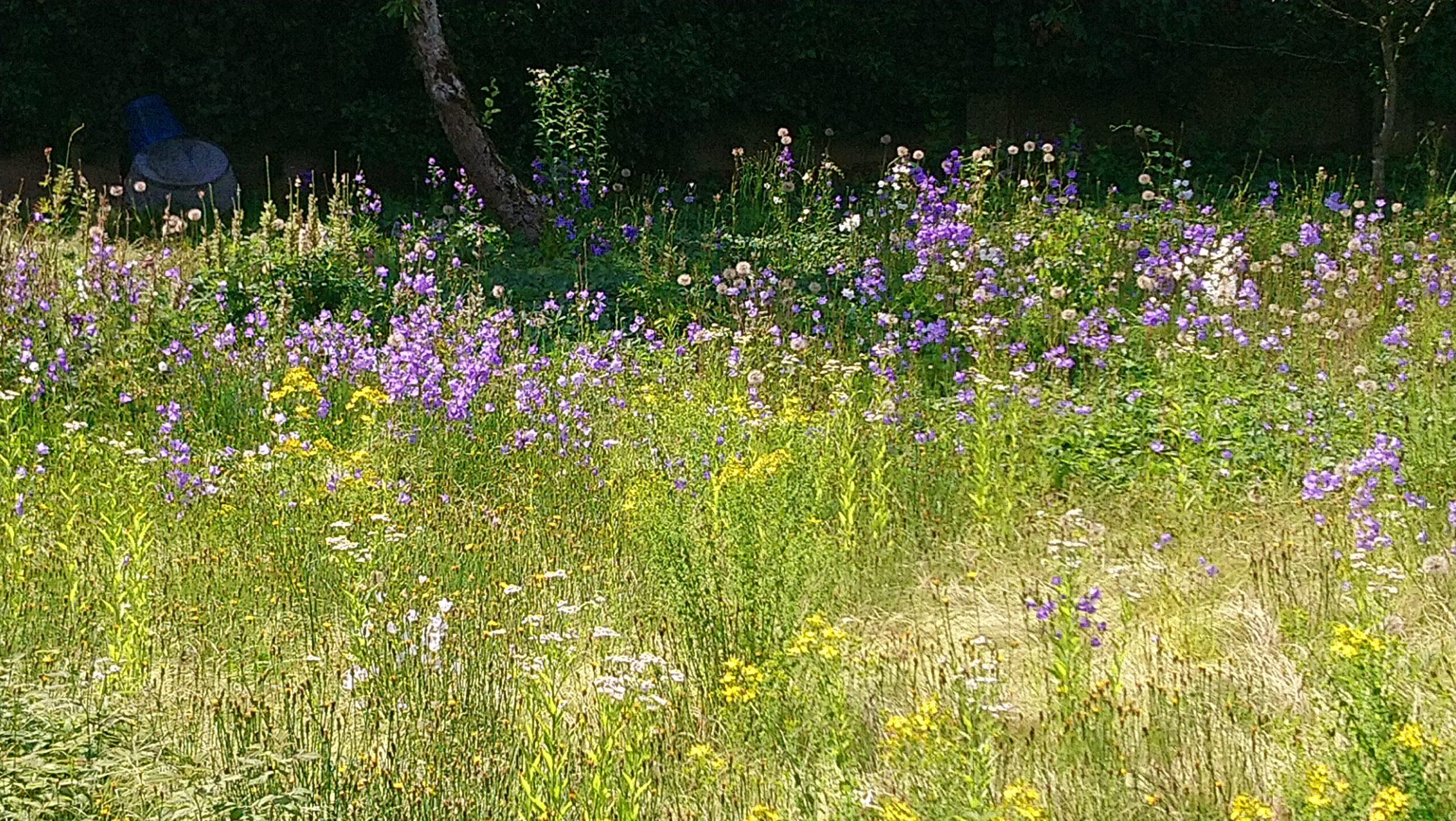 Platz für Arten gibt's in jedem Garten